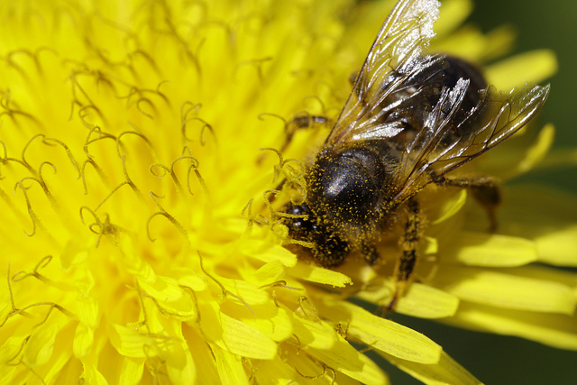 flowering plants and bees symbiotic relationship